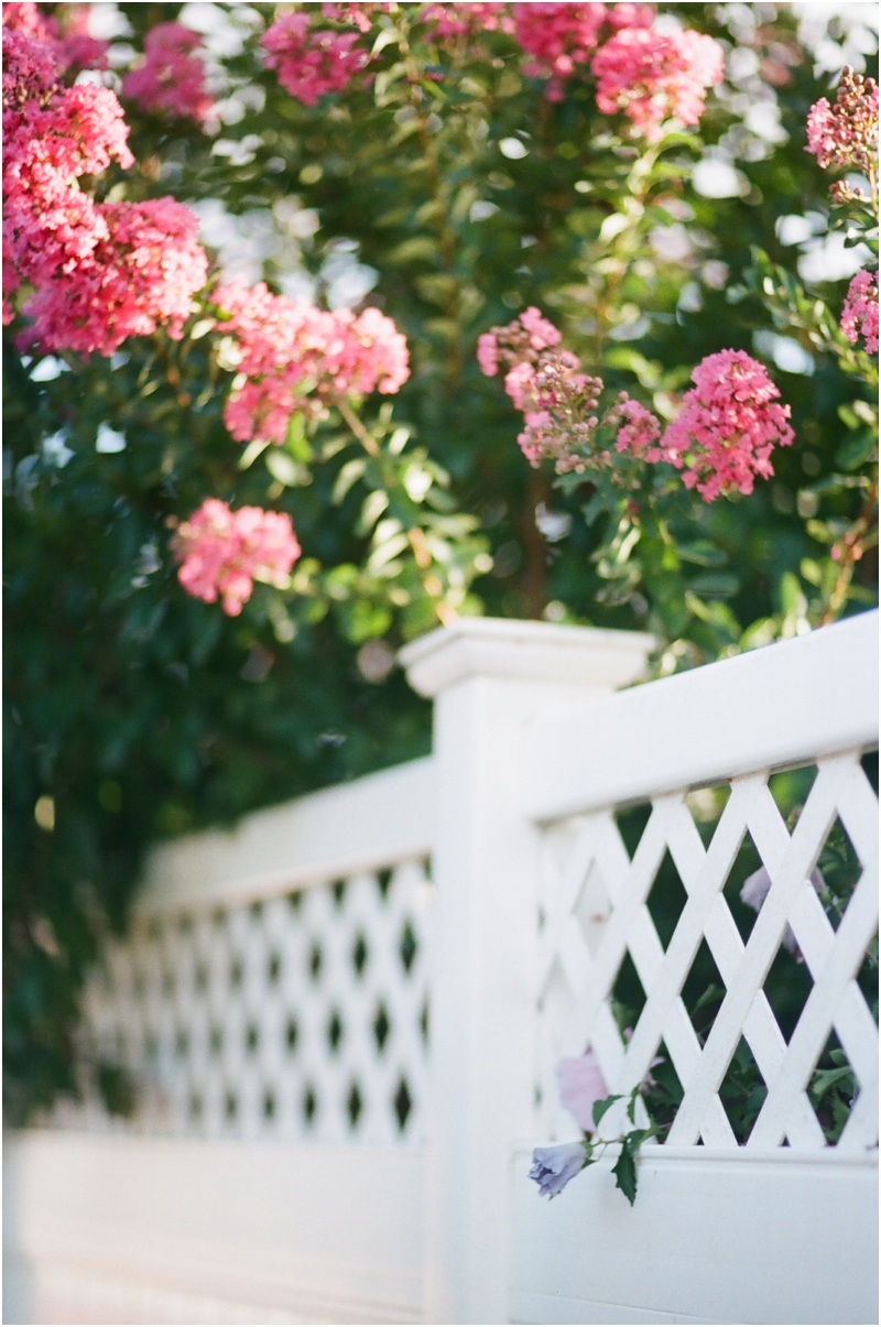 flowers on a fence bolivar mo - photography by jordanbrittley.com