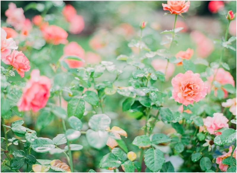 Flowers by Jordan Brittley