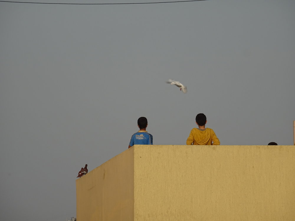 Palestinian youth flying pigeons in Baddawi camp (  April   2016)
