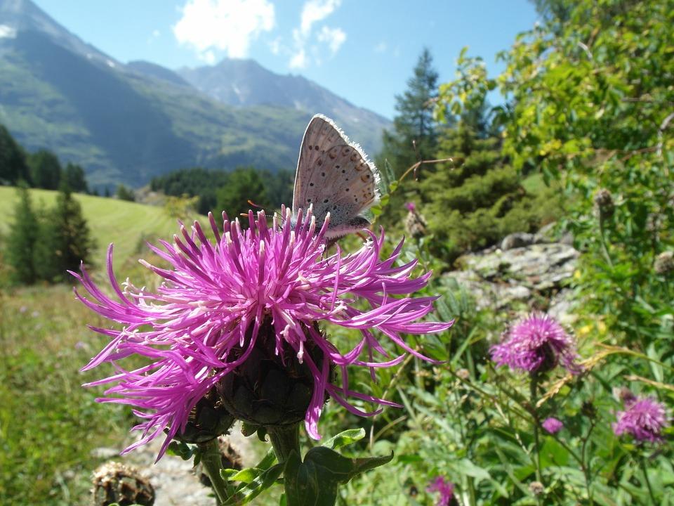 butterfly-1206372_960_720.jpg