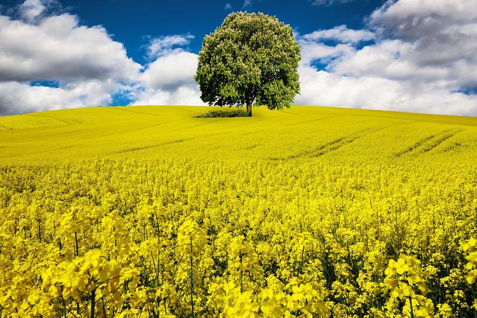 tree-200404_960_7201.jpg