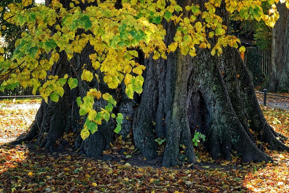Roots-at-Ryman-500.jpg