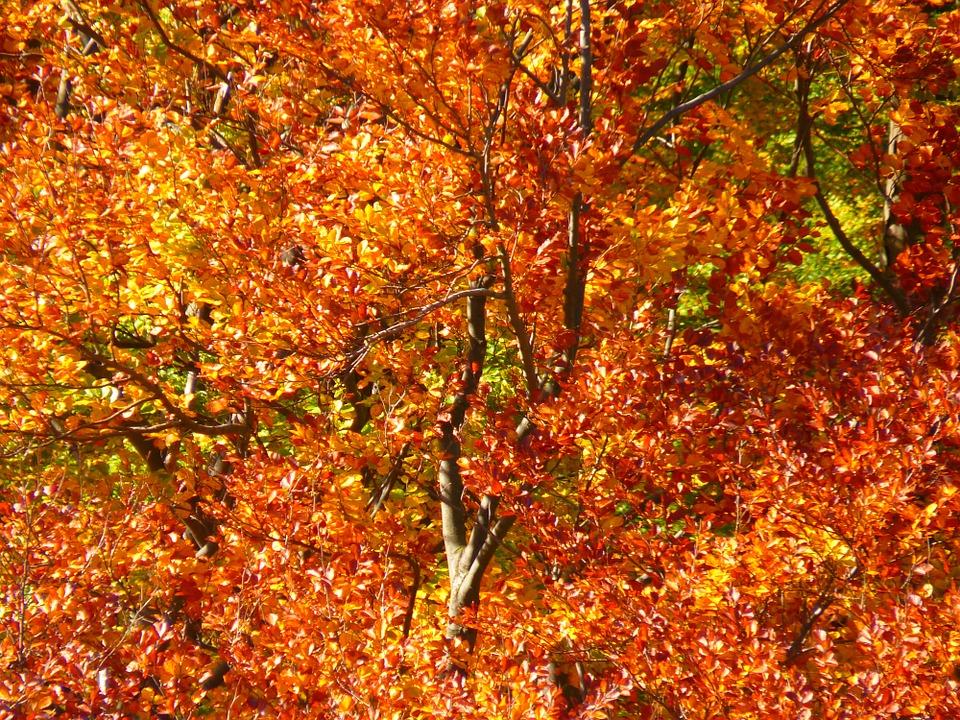 late-fall.jpg