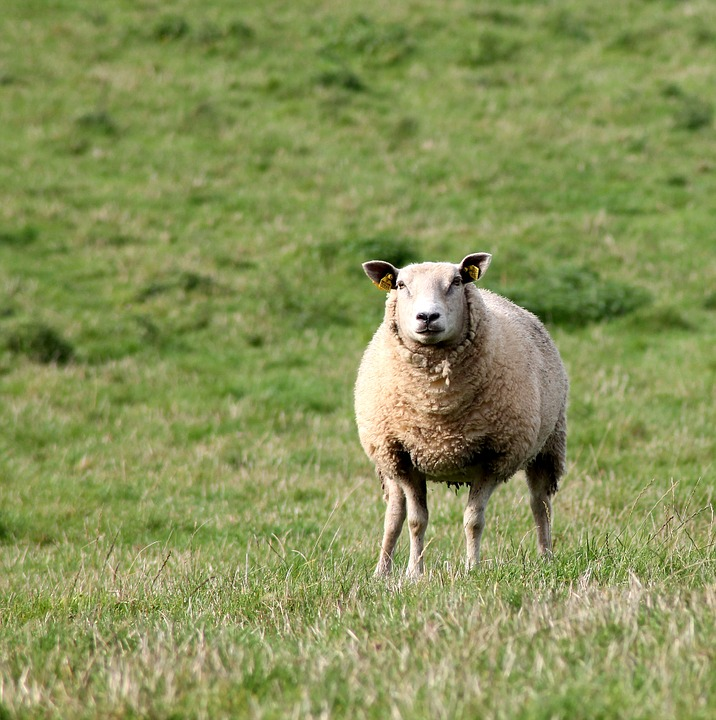 lost-lamb-2.jpg