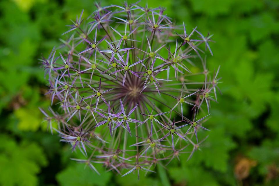 humbled_lavender.jpg