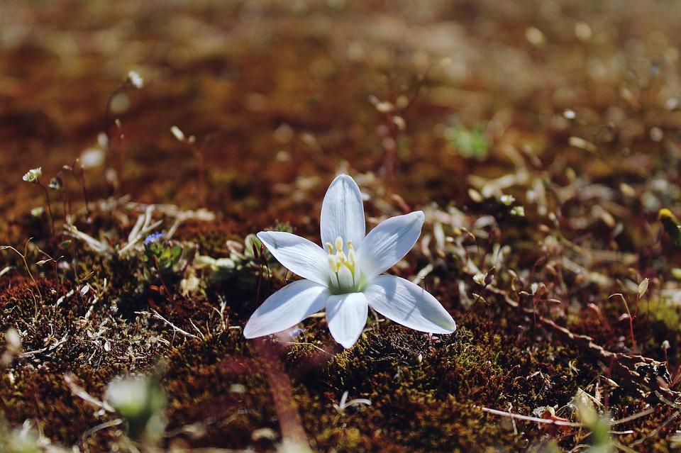 flower-1148911_960_720.jpg
