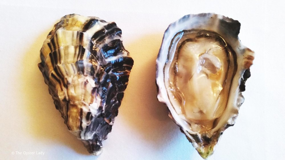Name:  Porthilly Rock Oyster   Species:  Crassostrea gigas   Location:  Porthilly Farm, Cornwall, UK      Merroir:    From the clean sandy waters of the Camel Estuary in Cornwall Porthilly Rocks have a good ratio between salinity and freshwater from the river.     Flavours, textures and characteristics noted include:   Creamy, buttery, umami, fresh, clean, cucumber, zinc.    An oyster with a delicate  Nose  and full creamy  Body  and a lasting  Finish     Their merroir has a 'sister' terroir higher up the river with the world famous Camel Valley Vineyard.      Salinity:  6/10   Meat to Shell Ratio:   9/10 Consistently plump and balanced between gill and body mass.   Cup depth:  Deep cup, sometimes reaching up to 2 inches.   Website:    www.rockshellfish.co.uk
