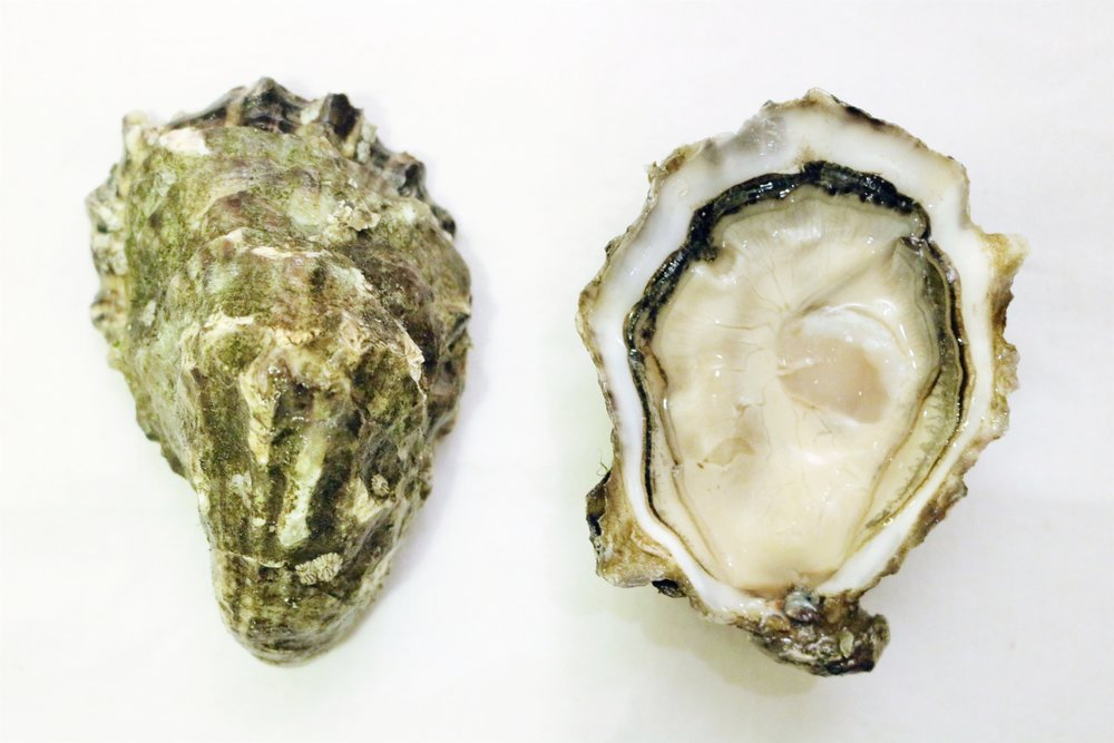 Harty Oysters