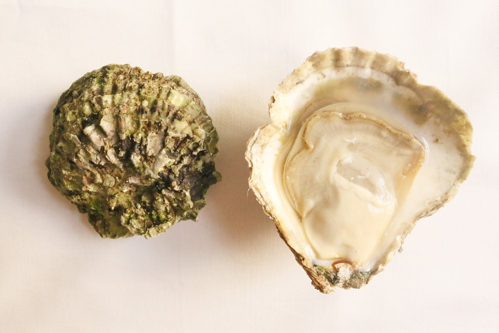 Fal Bay Oyster