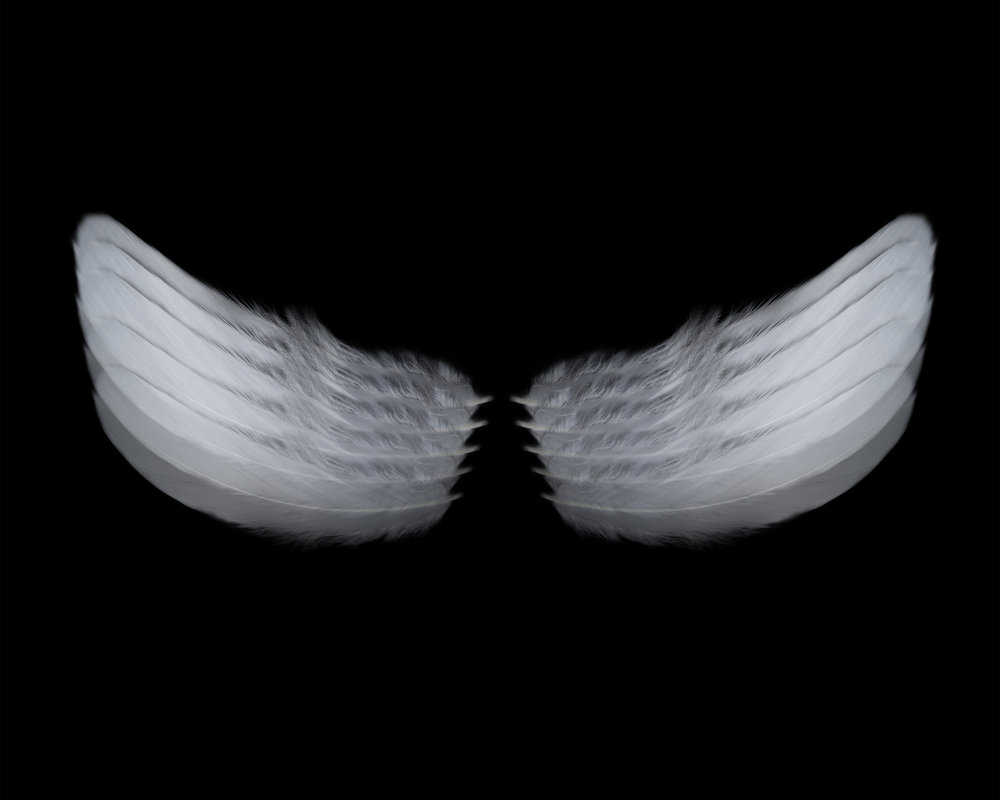 Wings_MaritzaDeQuesada copy.jpg