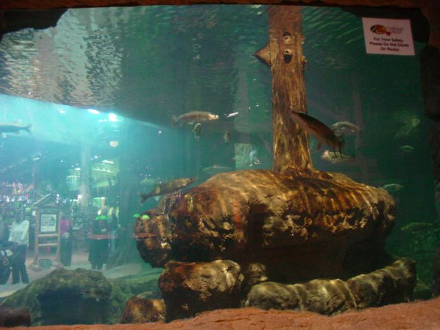 other-bass-aquarium-1.jpg