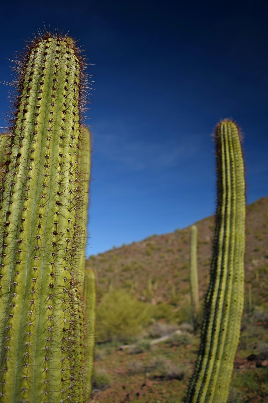 Arizona_0268.jpg