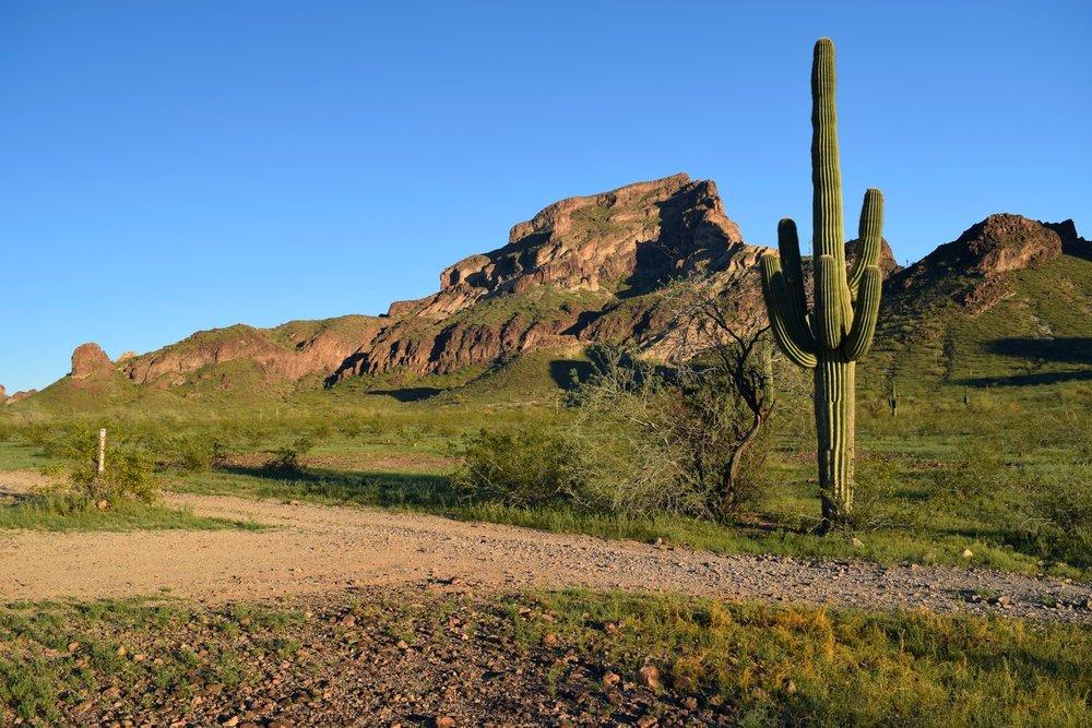 Arizona_0343.jpg