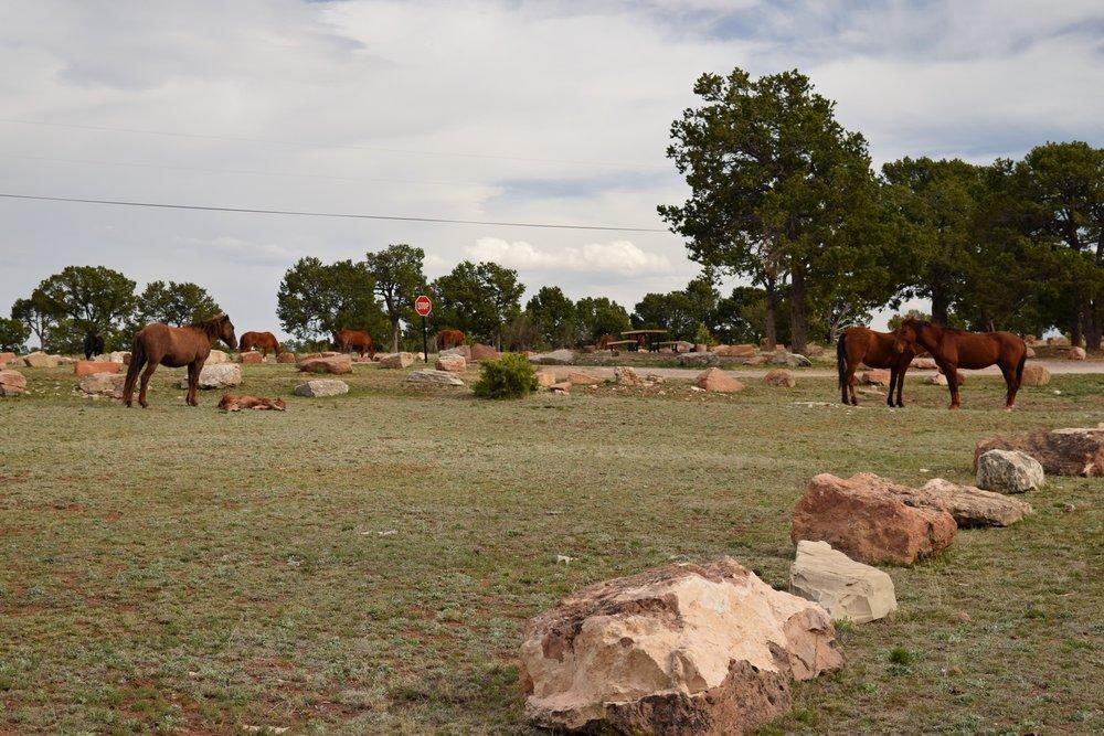 New_Mexico_0503.jpg