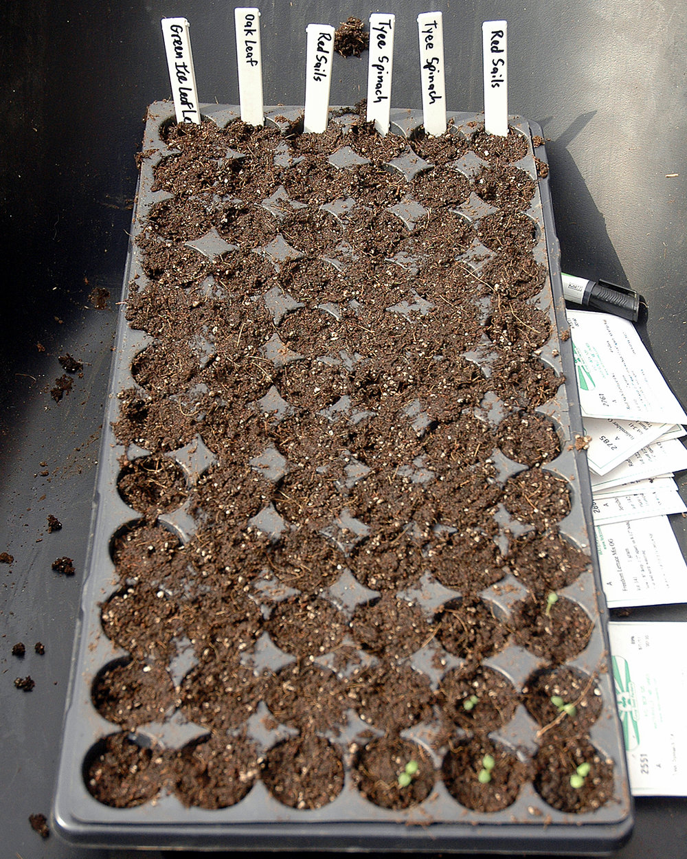 Various Seedlings