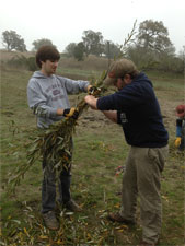Volunteers bundle willow branches for a bioengineering installation