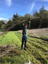 Students remove invasive French broom