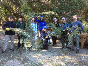 Interns help install willow along Adobe Creek
