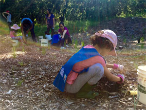 Volunteers plant native bunchgrasses