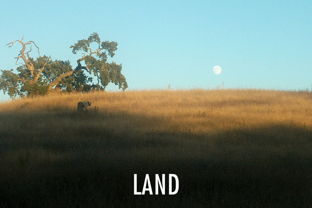 Land Home page image.jpg