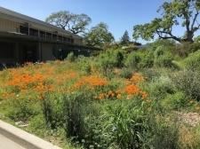 Corte Madera School Garden.JPG