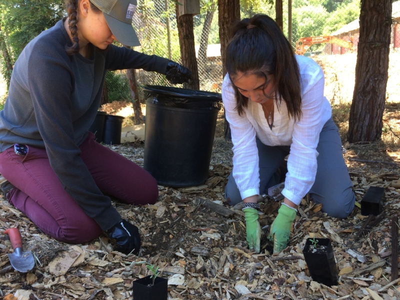 Interns planting native species in the demonstration garden of Grassroots Ecology's nursery.