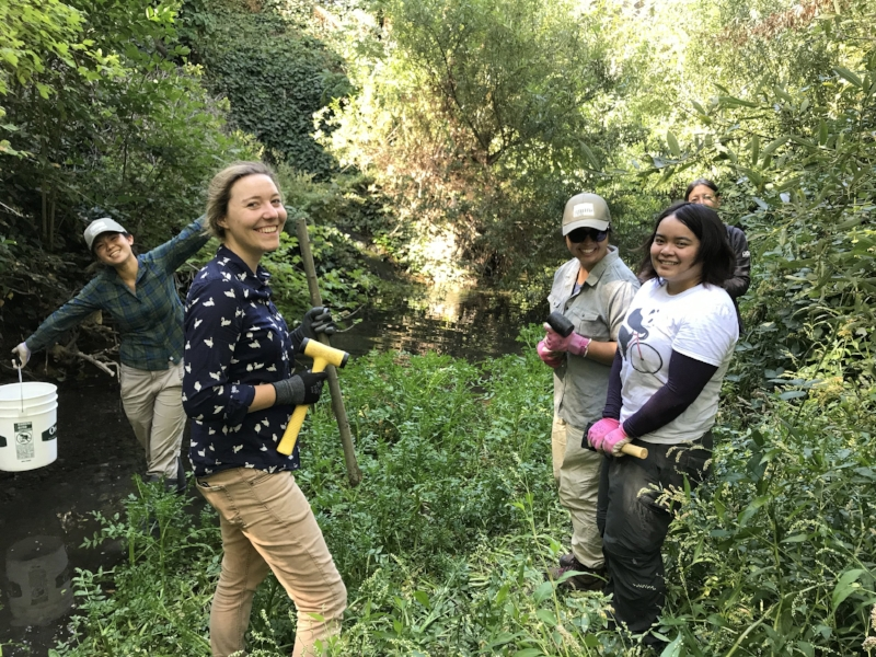 Grassroots Ecology staff team up to do willow staking along San Francisquito Creek