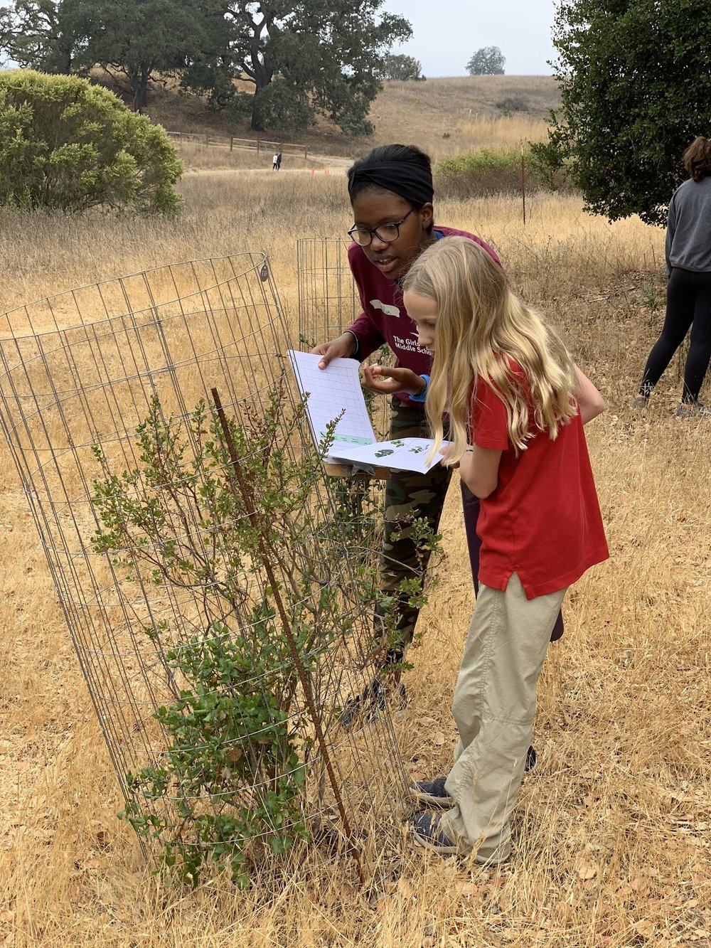 Girls Middle School students monitor oak trees at Arastradero Preserve - recording species, height, and signs of herbivory.
