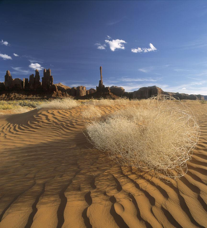 tumbleweed_dunes.jpg