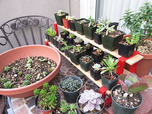 Shirley's Simple Shelving  Mini Easy  stand with rooted cuttings.