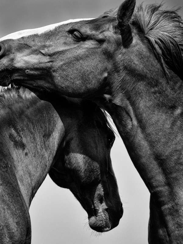 Mel Stone – Horse Play - Best Black & White Judges Award