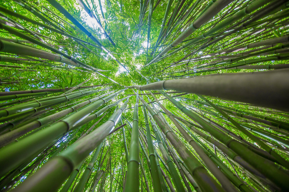 bamboo-forest-hike-epic-experience-maui
