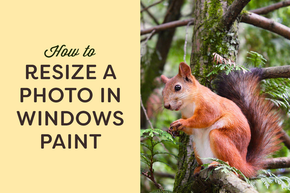Resiszing a photo in Windows Paint is an easy and essential process for web use.