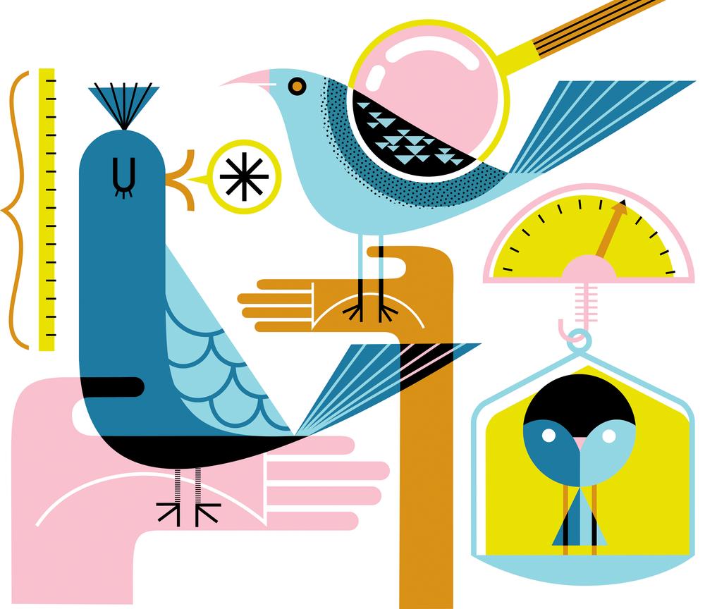 Birdmeasuring.png