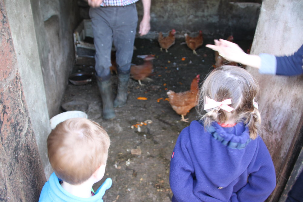 feeding-chickens-at-a-farm-in-ireland.jpg