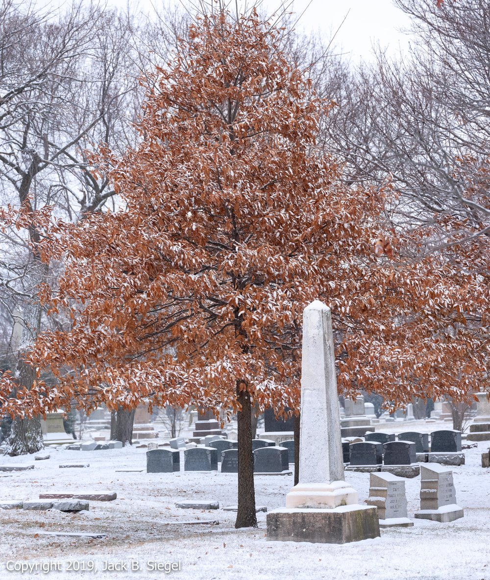_DSF1667PS__Copyright 2018 jpeg_Tree and Tombs in Snowfall.jpg