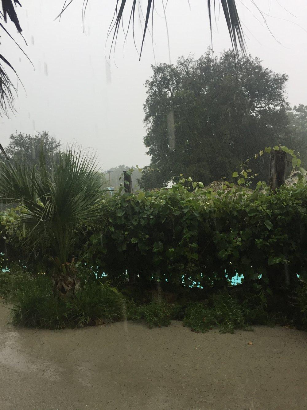 rain coming down.JPG
