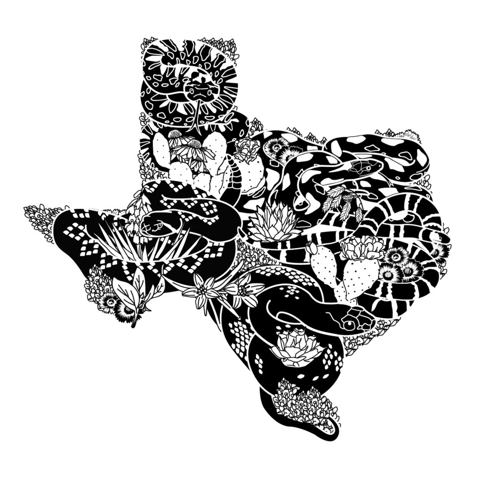 TXSI logo + illustration