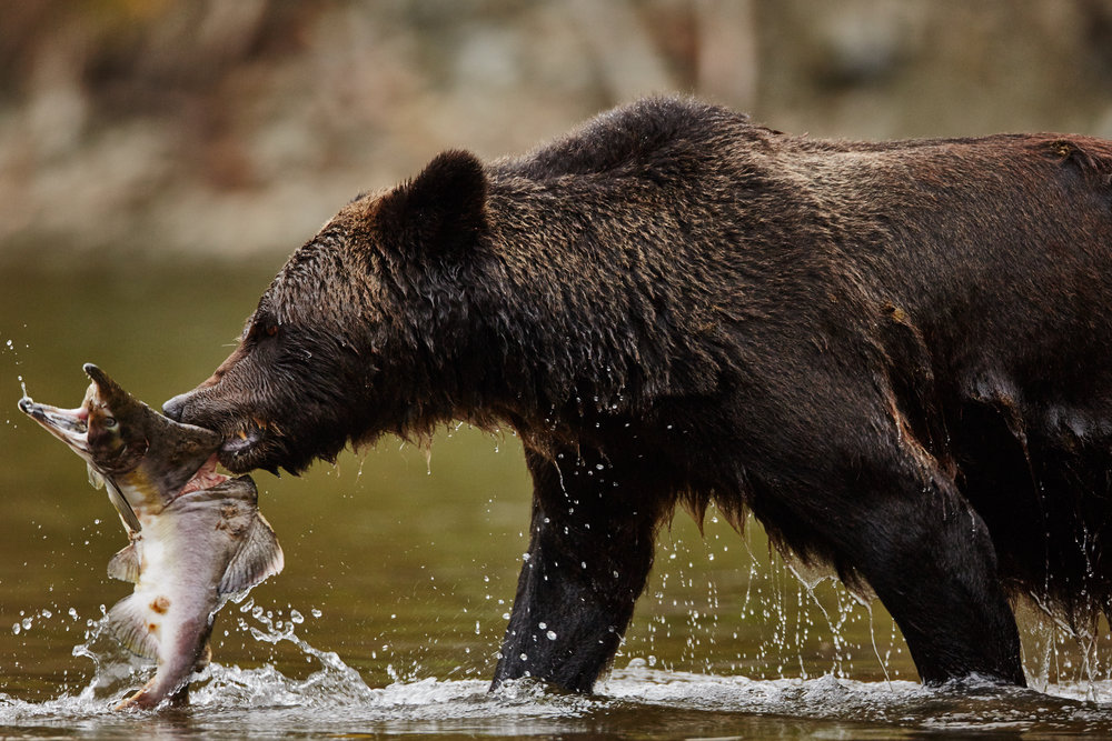 bear28 (1).jpg