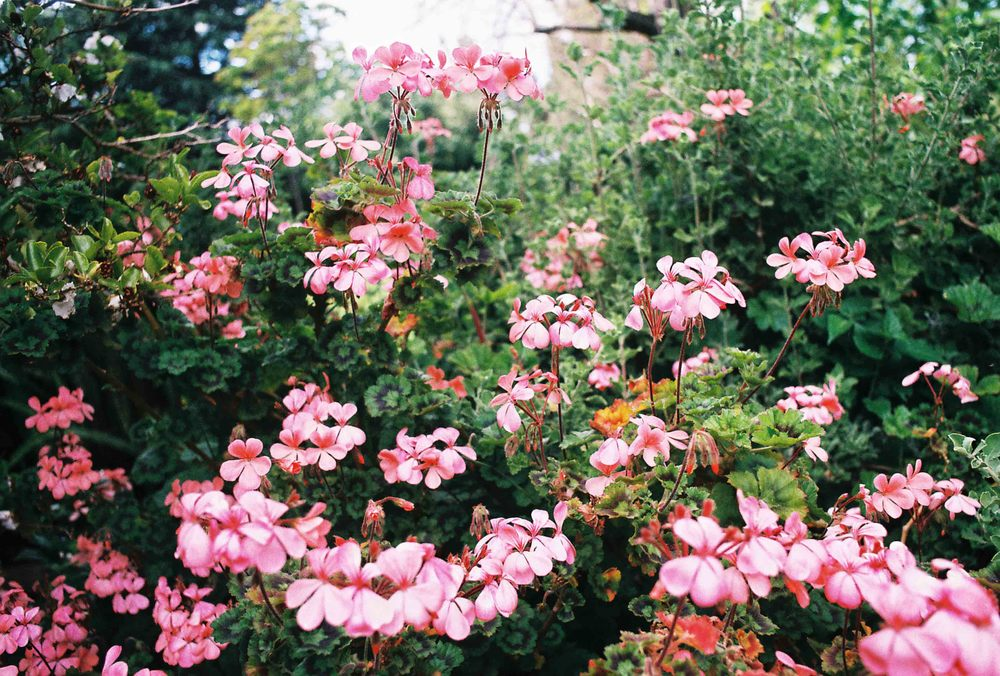 floralss.jpg