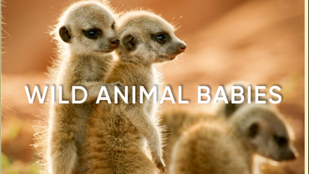 wild_animal_babies.png