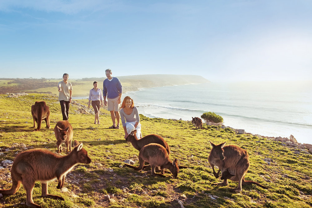 Kangaroo Island beaches and tourism