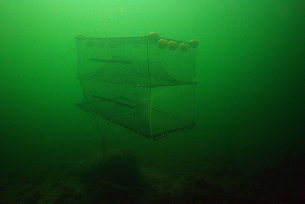 CURRENT DIRECTIONAL COD TRAP