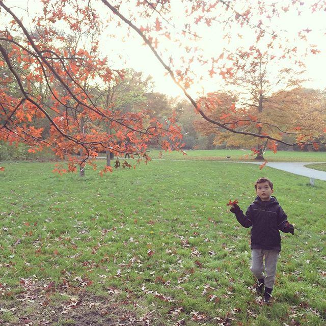 もみじ狩り🍁 - #momiji #momijigari #autumn #amsterdam #flevopark #もみじ #紅葉 #秋