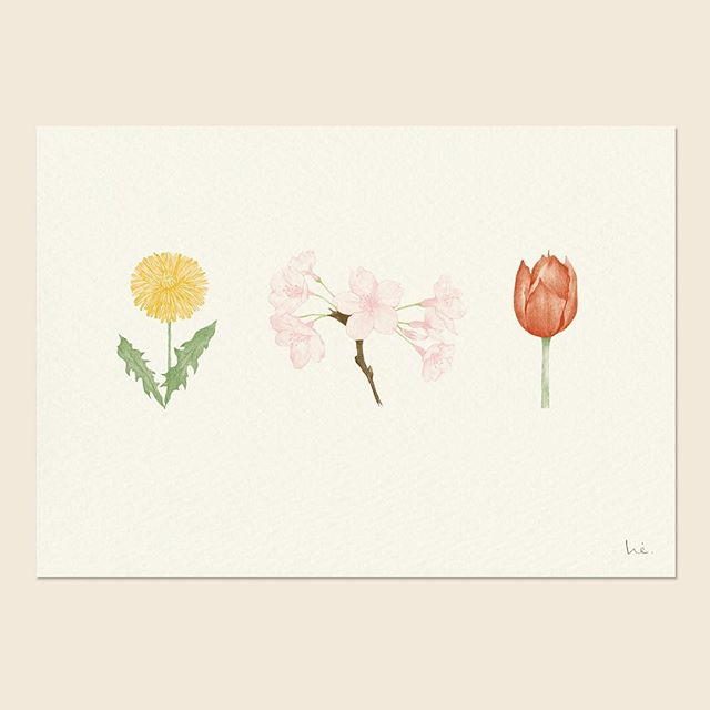 春のお花 spring flowers  this pigment ink print is available at my shop   @hiyokoimai  #pencildrawing #pencilillustration #dandelion #tulip #sakura #springflowers #walldecor #kidsroomdecor