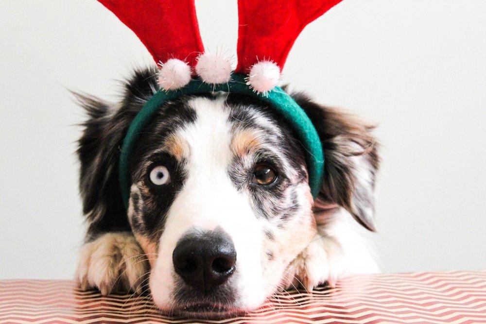 ChristmasPup.jpg