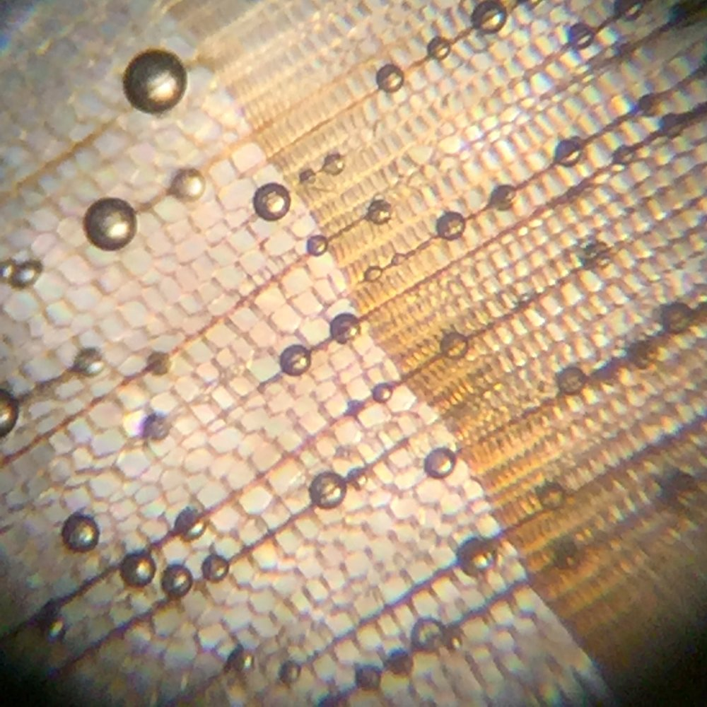 View through microscope of growth ring boundary (Note, round air bubbles are not part of cell structure)