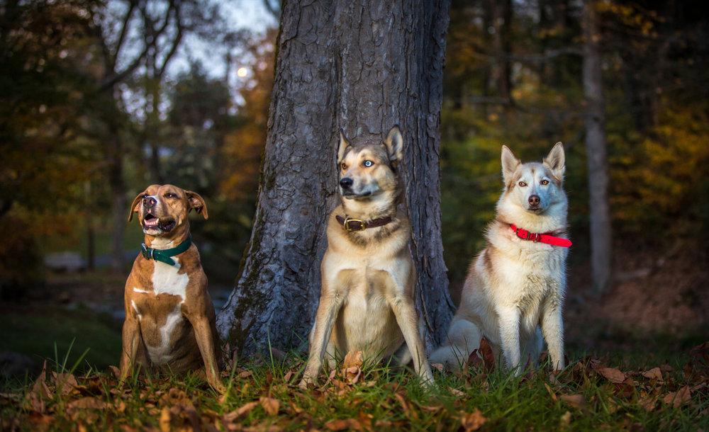 Oliver, Turbo & Cherokee