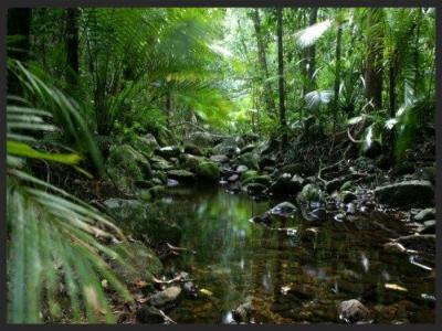 Daintree Rainforest Cairns Australia