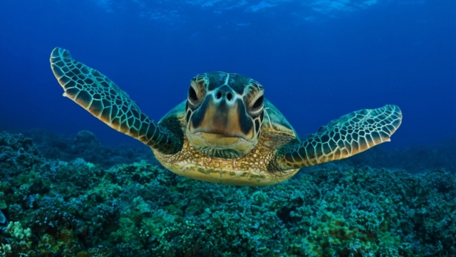 Great Barrier Reef and Daintree Rainforest Tours